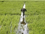 Moratorium Interest Waiver: Agriculture, Tractor Loans Not Included In Relief Scheme