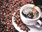 Tata Coffee Surges To 52-Week High On Strong Q3 Results
