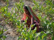 Over 2.69 Lakh Farmers Did Not Receive Benefits Of PM-KISAN Scheme