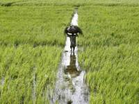 What Is Zero Budget Farming? How Will It Help With Farm Loans?
