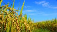 4 Agriculture Stocks With High EPS To Consider In 2021