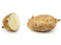 Potato increases on account of spot demand