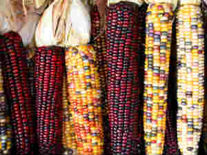 Bajra, maize ease on subdued demand