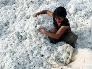 Govt lifts ban on cotton exports