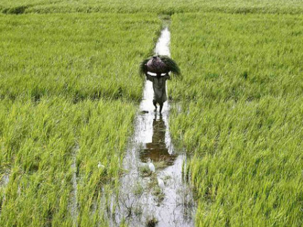 India Needs To Invest In Agriculture For Doubling Farm Income