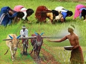 El Nino Likely Impact Farm Production Food Prices Economic Survey
