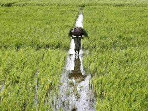 India Needs Invest Agriculture Doubling Farm Income