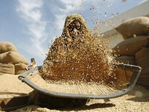Customs Duty On Wheat Increased To