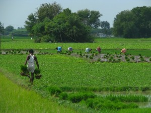 Maharashtra Tops Niti Aayog S Ease Of Doing Agribusiness Index