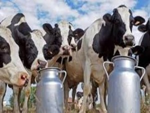 Animal Husbandry Infrastructure Development Fund Launched
