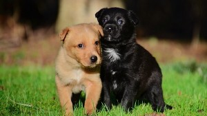 Insurance For Pets In India All You Need To Know