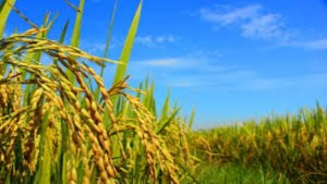 Agriculture Ministry Gets Boost In Budget