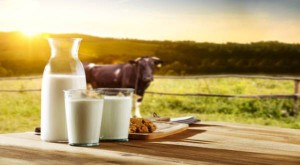 Dairy Industry To Log 5 6 Growth This Fiscal Crisil
