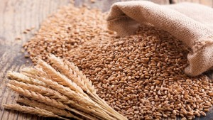 Government Hikes Msp On Wheat Only By 2